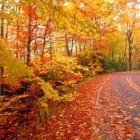 7 Fun Date Ideas for Fall!