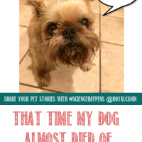 Pet Emergencies Are Best Left to the Experts // That Time My Dog Almost Died of Heat Exhaustion