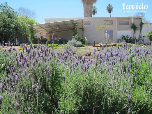 lavido-visitors-center-nahalal-garden-lowres