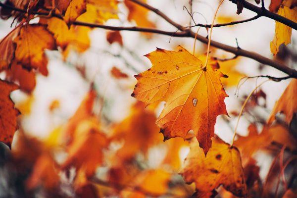 autumn-843213_1280