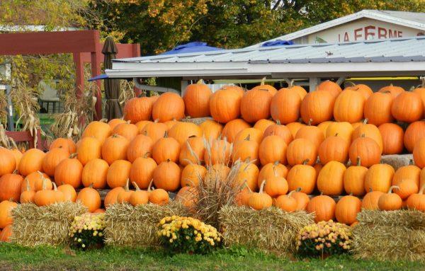 3 Reasons to Visit A Pumpkin Farm