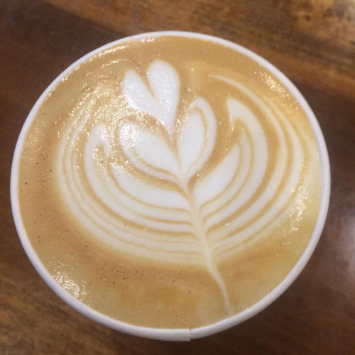 auggis lavender coffee latte art