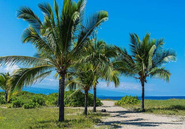Healing Hawaiian Botanicals with Honua Skincare