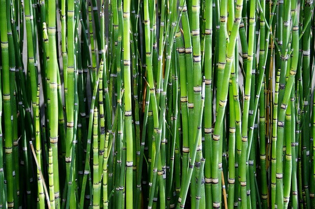 bamboo - The Significance of Flowers