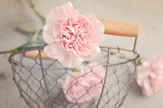 pink carnations - The Significance of Flowers